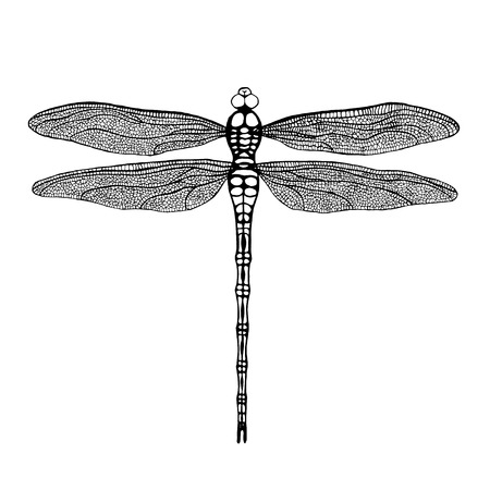Dragonfly. Black dragonfly on white background. Hand drawn vector damselfly. Çizim