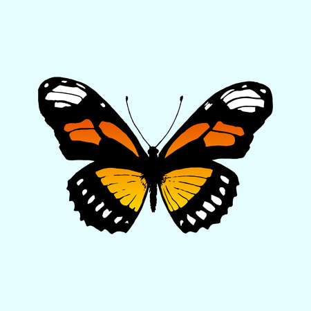 monarch butterfly: Vector butterfly Monarch. Butterfly Danaus plexippus Illustration
