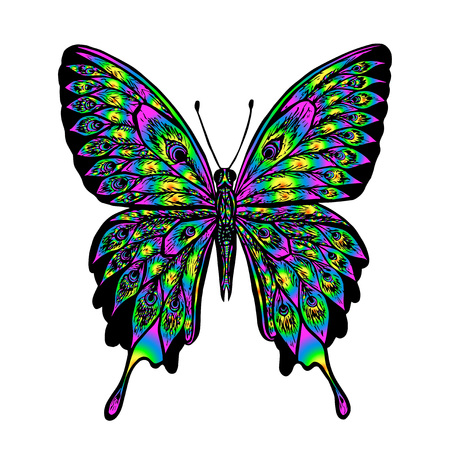 butterfly background: Vector colorful butterfly on white background