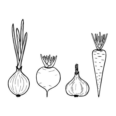 illustration of vegetables on white background. Vector carrot, onion, garlic, beet Illustration