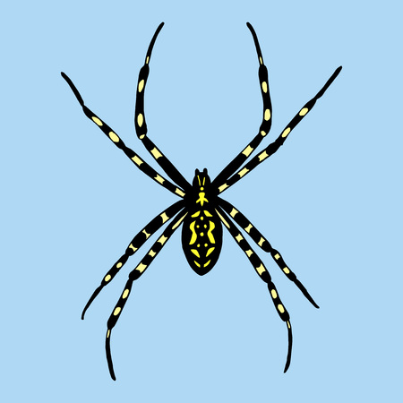 bruennichi: Vector illustration of spider. Argiope bruennichi on blue background