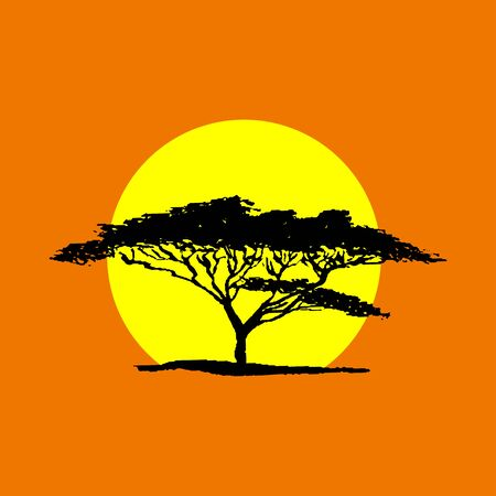 flora: Vector silhouette of acacia tree in safari sunset background.  African flora Illustration