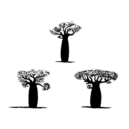 botanics: vector set of three hand drawing black baobabs on white background. Vector silhouette of baobab