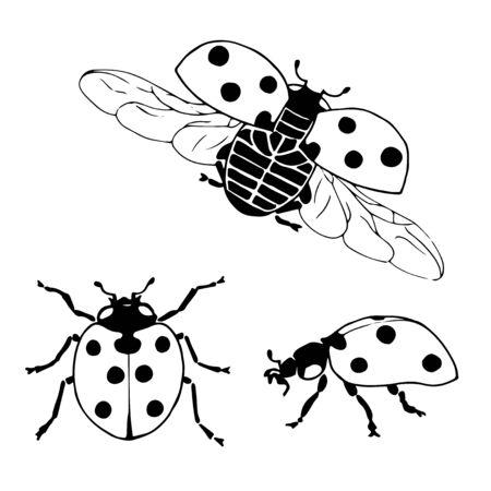 ladybug: Vector set of ladybug in different positions. Hand drawing ladybug.