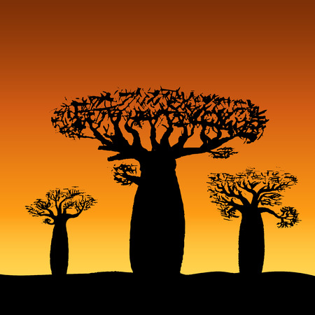 vector illustration three baobabs at sunset or sunrise Illustration