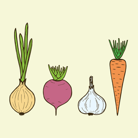 beet root: vector vegetarian vegetables - onion, carrot, beet, garlic. Vector roots.