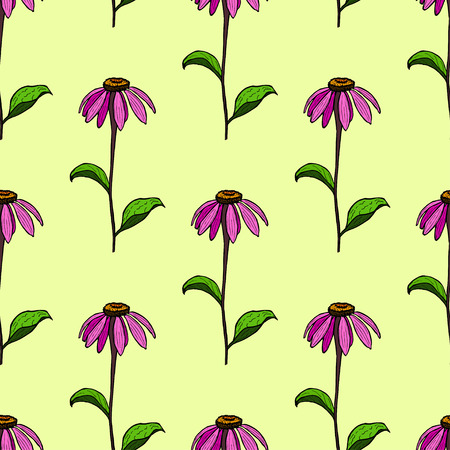coneflowers: seamless pattern from flowers of coneflowers. Color hand drawing flower Echinacea. Illustration