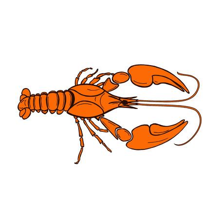 vector illustration of orange cancer Illustration