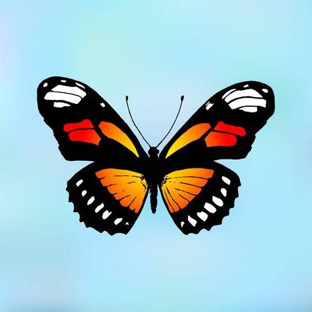 plexippus: Vector butterfly Monarch. Butterfly Danaus plexippus Illustration