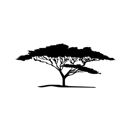 silhouette of acacia tree. African flora