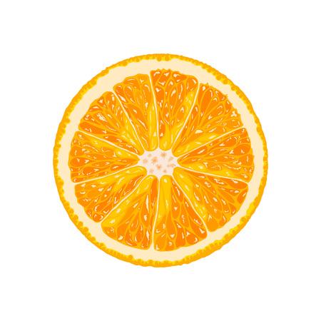 Vector orange slice. Illustration of citrus