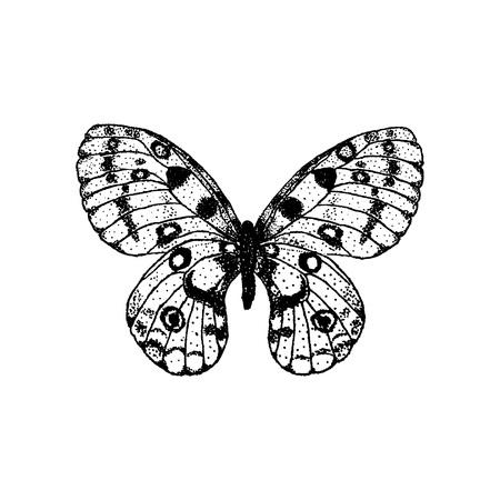 Butterfly illustration. Illustration