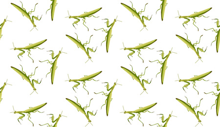 Vector seamless pattern of mantis on white background