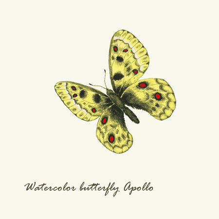 Vector watercolor butterfly. Parnassius apollo butterfly. Hand drawn illustration