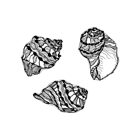 Vector seashell set. Hand drawn illustration of sketches mollusk sea shells.