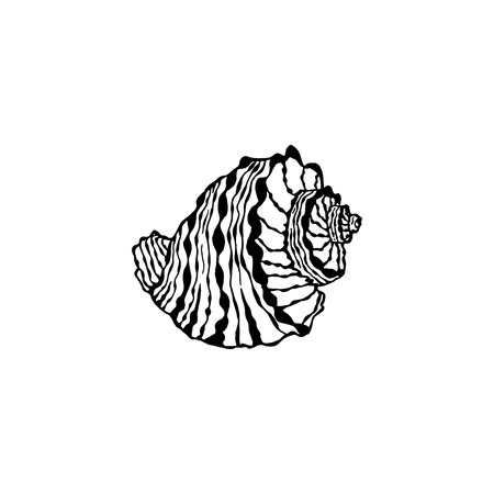 Vector seashell. Hand drawn illustration of sketches mollusk sea shells.