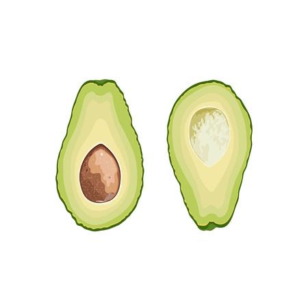 Vector fruit avocado. Avocado cut in half with a stone