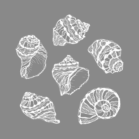 Vector of white graphic seashell set on gray background. Hand drawn illustration of sketches mollusk sea shells. Summer decorative sea elements