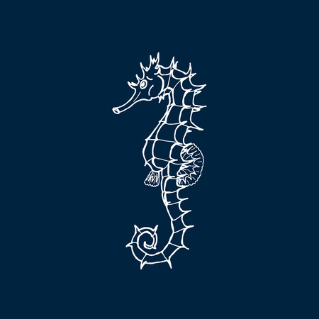 Vector illustration of white seahorse silhouette on dark blue background. Hand drawing seahorse Illustration