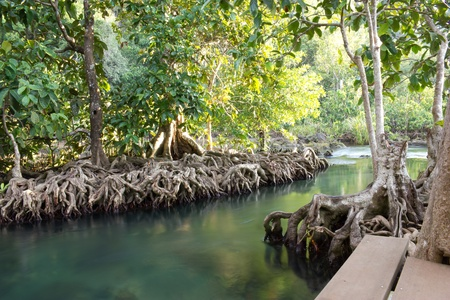 Mangroves at the water canal