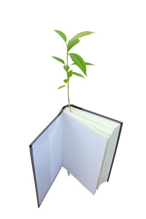 The growth of the tree and the use of paper