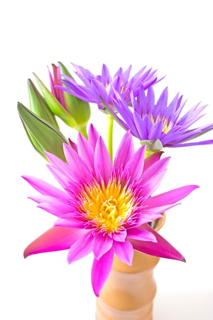 Lotus flower in a vase isolated on white background photo
