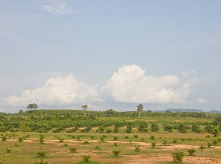 Palm oil plantations, as alternative fuel photo