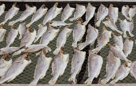 Dried fish photo