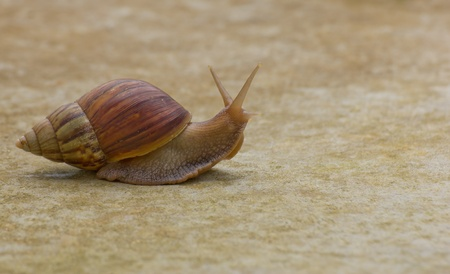 mucous: Snail on the ground