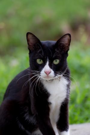 Black cat in garden photo