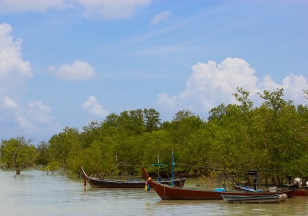 Fishing boat moored in the mangroves Stock Photo - 13810254