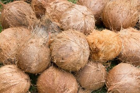 Coconut Stock Photo - 14198064