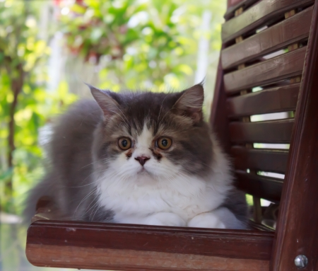 Persian cat sitting on the bench photo