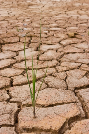 rainless: grass growing in dried ground Stock Photo