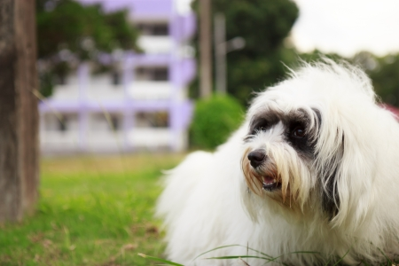 White dog on the green grass photo