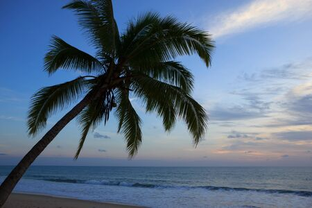 Silhouette coconut trees at sunset photo