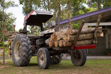 Timber trucks photo