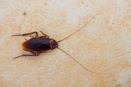Cockroach on floor Stock Photo - 18681460