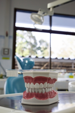 Teeth model with toothbrush
