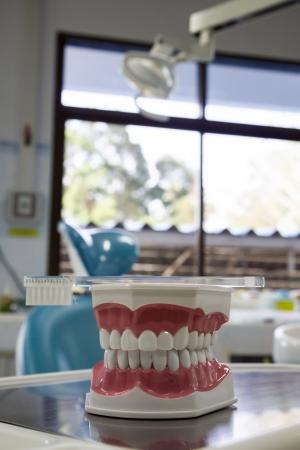 Zähne Modell mit Zahnbürste