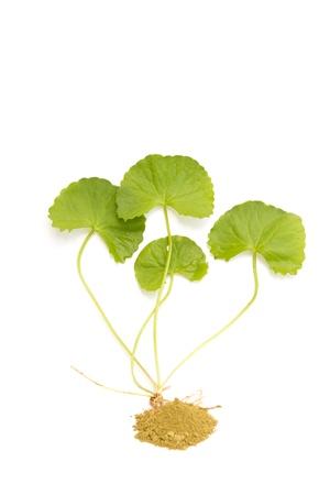 Herbal medicine from Centella asiatica