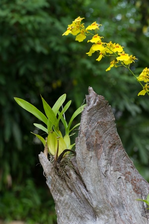 Orchid plant in a timber photo