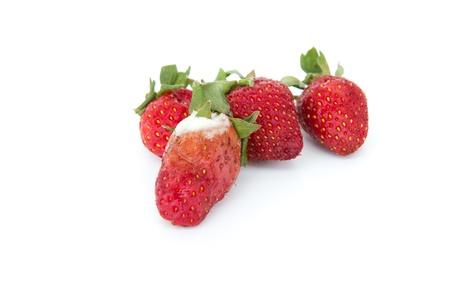 noxious: Rotten strawberries Stock Photo