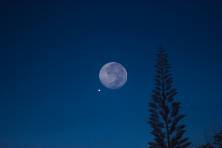 Nightly sky with large moon and christmas tree photo