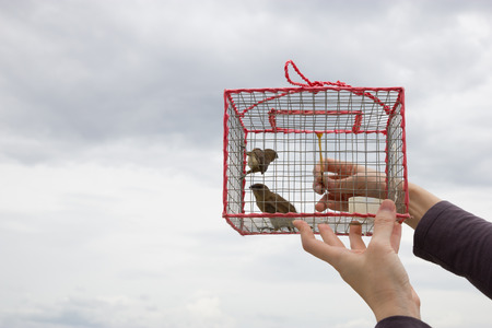 let out: Let birds out of cage