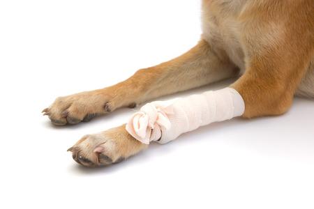 Elastic bandage on puppys leg Stock Photo