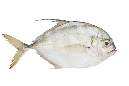 Pompano fish Stock Photo