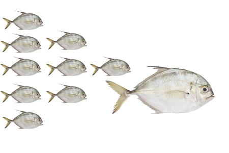 the fittest: Little fish eat big fish Stock Photo