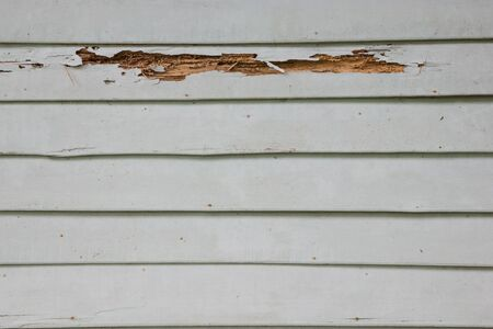 deteriorate: Wooden wall house with termites