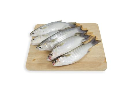 mullet: Fresh Mullet fish on wood